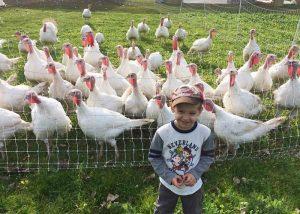 CSA Farm Green Bay WI turkey