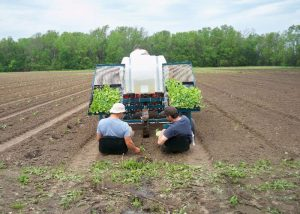 CSA Farm Green Bay WI planting