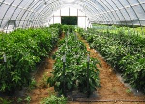 CSA Farm Green Bay WI hoop house
