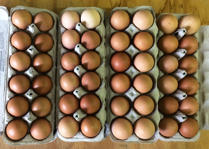 CSA Farm Green Bay WI farm fresh eggs