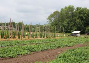 CSA Farm Green Bay WI outdoor crops